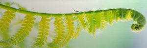 Eden Street, Barry Sherbeck, Photograph on metallic paper, 2012, 10 x 30, unframed, on styrene, Genesis 2, $120